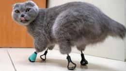 腳掌凍傷的貓使用3D列印的鈦義肢