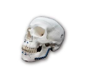 顱顏面骨醫療